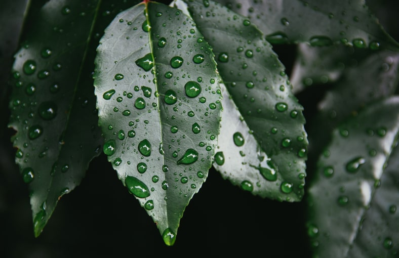 What Can Rainwater Be Used For
